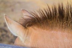 Уши и грива лошади на зоопарке стоковое изображение