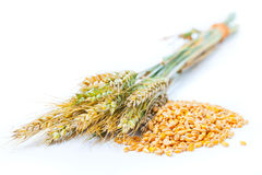 Уши и зерно пшеницы стоковые фото