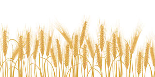 Уши картины горизонтальной границы пшеницы безшовной иллюстрация вектора