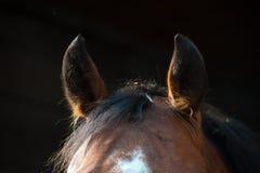 Уши коричневеют конец-вверх лошади на темной предпосылке стоковое фото