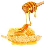 Уши меда и пшеницы Стоковые Фотографии RF