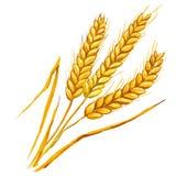 Уши нарисованной руки иллюстрации вектора пшеницы Стоковые Фото