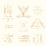 Уши логотипа пшеницы Стоковые Фотографии RF