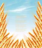 Уши предпосылки пшеницы вектор бесплатная иллюстрация