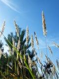 Уши пшеницы в лесе Стоковые Изображения RF