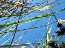 Уши пшеницы в лесе Стоковое Изображение