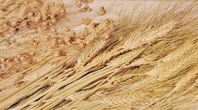 Уши пшеницы и овсов, хлопьев стоковое фото rf