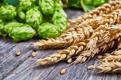 Уши пшеницы и свежие хмели стоковая фотография