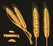 Уши пшеницы комплект значка вектора 3d иллюстрация вектора