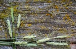 Уши пшеницы, конца-вверх Стоковое Изображение RF