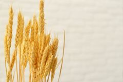 Уши пшеницы на предпосылке белизны стоковые фотографии rf