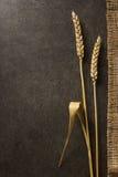 Уши пшеницы на черноте Стоковое фото RF