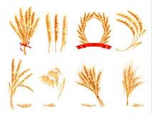 Уши пшеницы, овса, рож и ячменя иллюстрация вектора