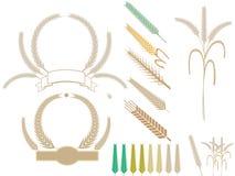 Уши пшеницы сбора иллюстрация вектора