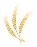 Уши пшеницы также вектор иллюстрации притяжки corel иллюстрация вектора