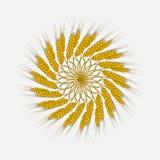 Уши пшеницы, ячменя или рож сплетены в одну пачку иллюстрация вектора