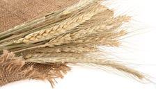 Уши пшеницы Стоковое Изображение RF