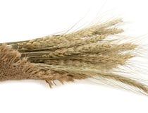Уши пшеницы Стоковое фото RF