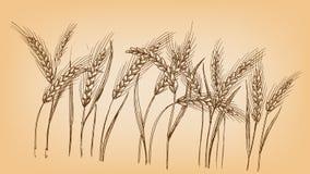 Уши пшеницы иллюстрация штока