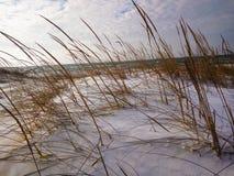 Уши травы в белом снеге в зиме Стоковые Изображения RF