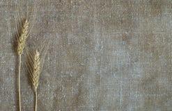 2 уш пшеницы на предпосылке старой грубой мешковины Стоковое Изображение