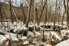 Ущерб от наводнения от варенья льда Стоковые Фото