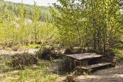 Ущерб от наводнения в парке Стоковое Фото