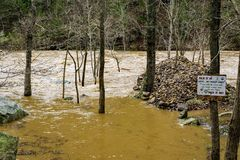 Ущерб от наводнения на реке Maury стоковое изображение rf