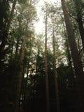 Ущелье Вермонт Queechee Стоковое Фото