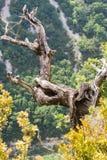 Ущелье Вердон в юговосточной Франции, Haut Провансаль, стоковые фото