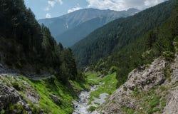 Ущелье горы с зеленым лесом Стоковая Фотография RF