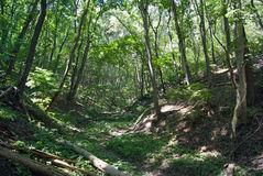 Ущелье леса Природа области Саратова Стоковое Фото