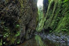 Ущелье Oneonta Gorge Рекы Колумбия Стоковое Фото