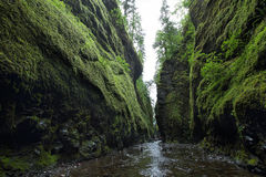 Ущелье Oneonta Gorge Рекы Колумбия Стоковые Фотографии RF