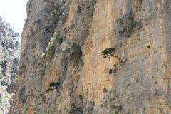 Ущелье Samaria, Крит Стоковые Фотографии RF