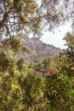 Ущелье Samaria Стоковые Изображения RF