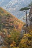 Ущелье Tasnei, Румыния Стоковое Изображение
