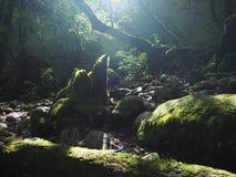 Ущелье Yakushima Shiratani Unsui-kyo стоковая фотография rf