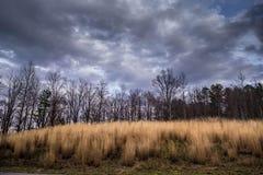 Уютное поле Стоковая Фотография RF