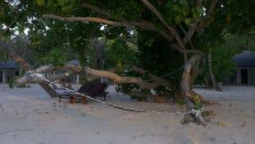 Уютный гамак и шезлонг в тени тропических деревьев на пляже на предпосылке бунгала пляжа сток-видео