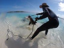 Улавливать акулы Стоковая Фотография RF