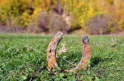 Удачливая подкова в траве Стоковые Изображения