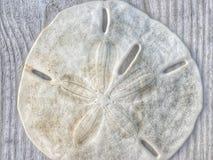 Удачливый доллар песка Стоковая Фотография RF