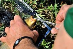 Удаление рыболовного крючка Стоковая Фотография