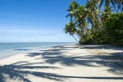 Удаленные тропические бразильские тени пальмы пляжа Стоковые Фотографии RF