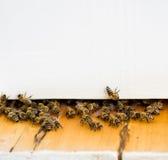 Улей и пчела Стоковая Фотография RF