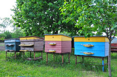 Улей пчелы Стоковое Изображение RF