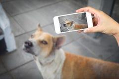 Удерживание руки женщины и бездомная собака чернь использования, сотовый телефон, умная фотография телефона и Стоковые Изображения