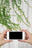 Удерживание руки женщины и использование умного телефона с экраном и деревянного пола стены и деревянных с орнаментальными завода Стоковые Изображения RF