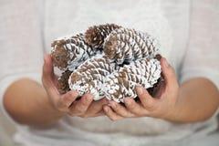 удерживание руки конуса кедра Стоковая Фотография RF